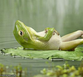 280px-Relaxing_Frog
